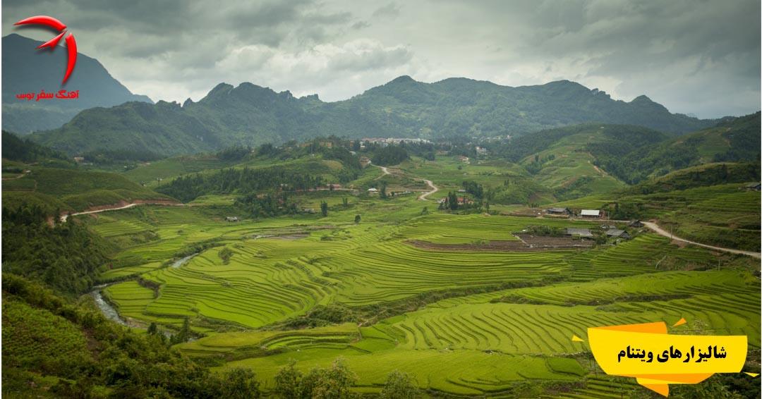 شالیزارهای ویتنام