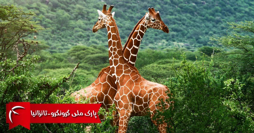 پارک ملی گرونگرو تانزانیا